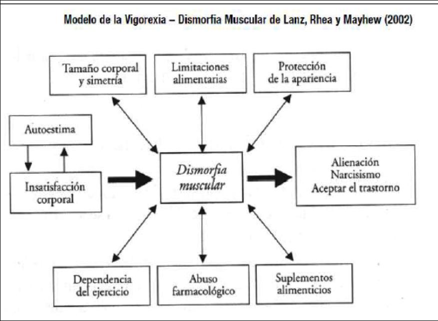 Vigorexia. Dismorfia Muscular de Lanz